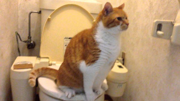 この夏のトイレトレーニングの成果を報告するトピ