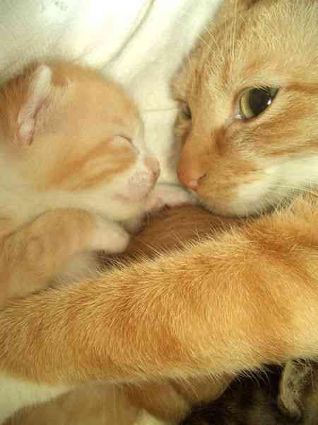 【画像】猫の親子が見たい