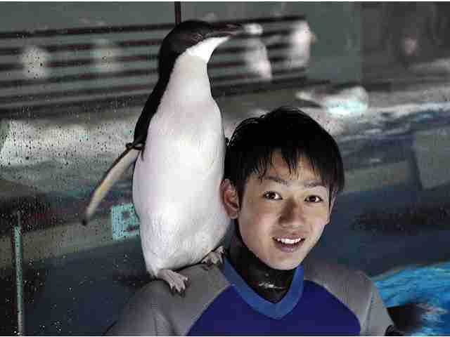 【画像】ペンギンを愛でるトピ