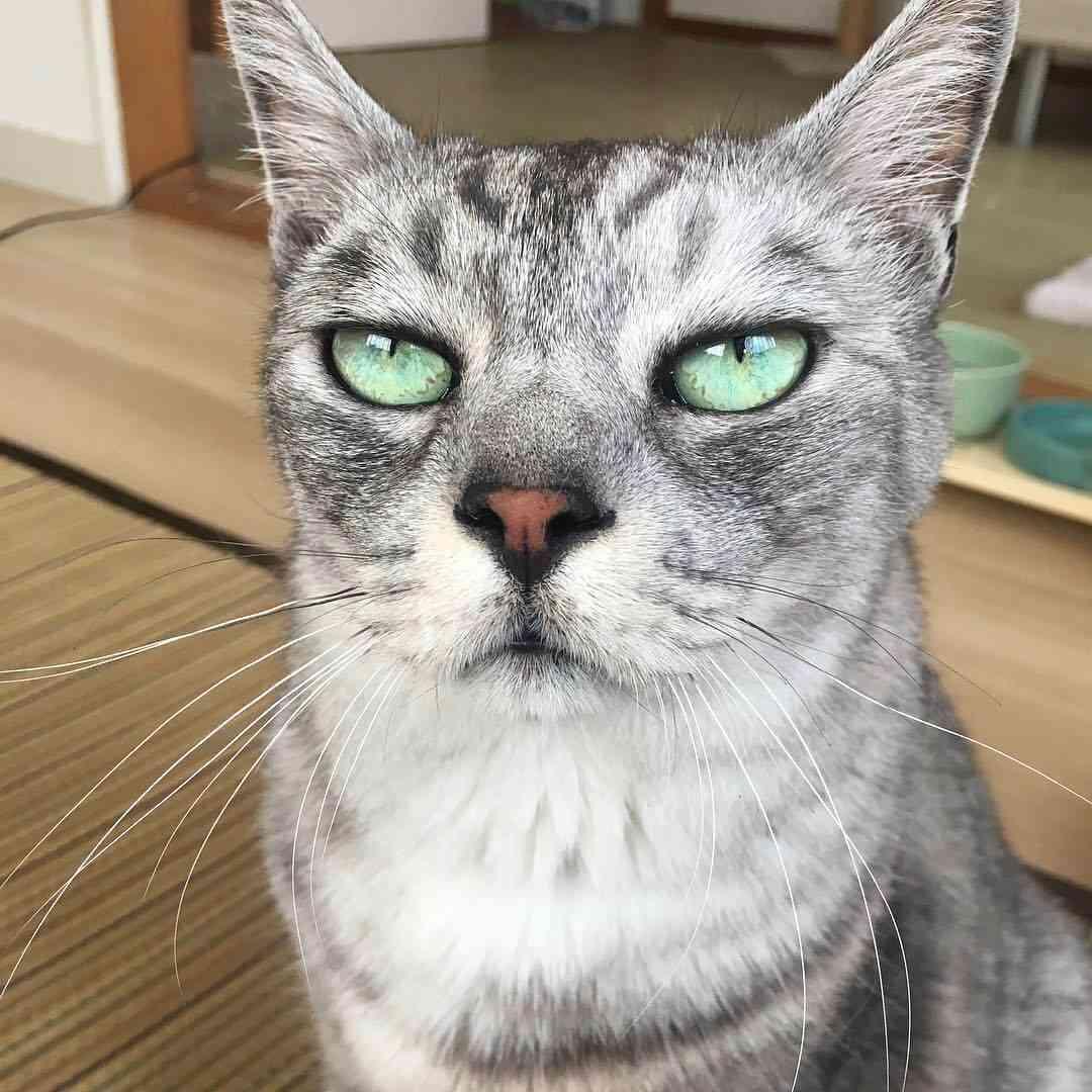 ガルちゃん猫カフェ21号店 開店しました♪ (初めての方も大歓迎!)