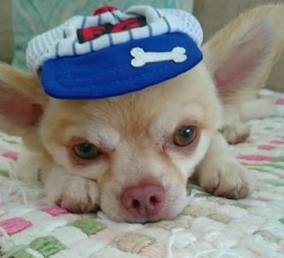 坂上忍 犬への愛情が高じて人知れずセカンドハウスを大増築