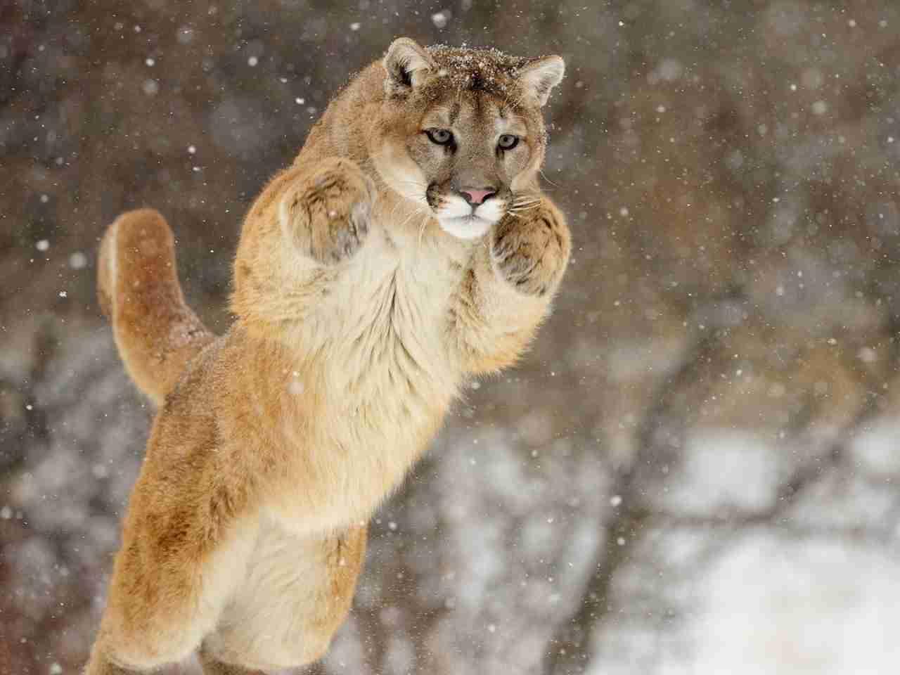 【踊る・舞う・飛ぶ】動物達の画像