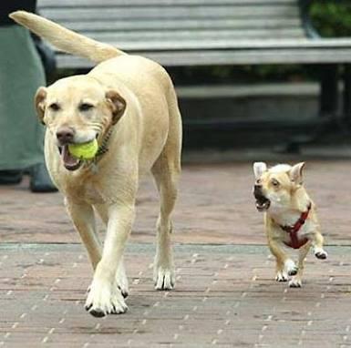 【画像】犬の親子が見たい