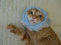 犬・猫に洋服着せてる方‼︎