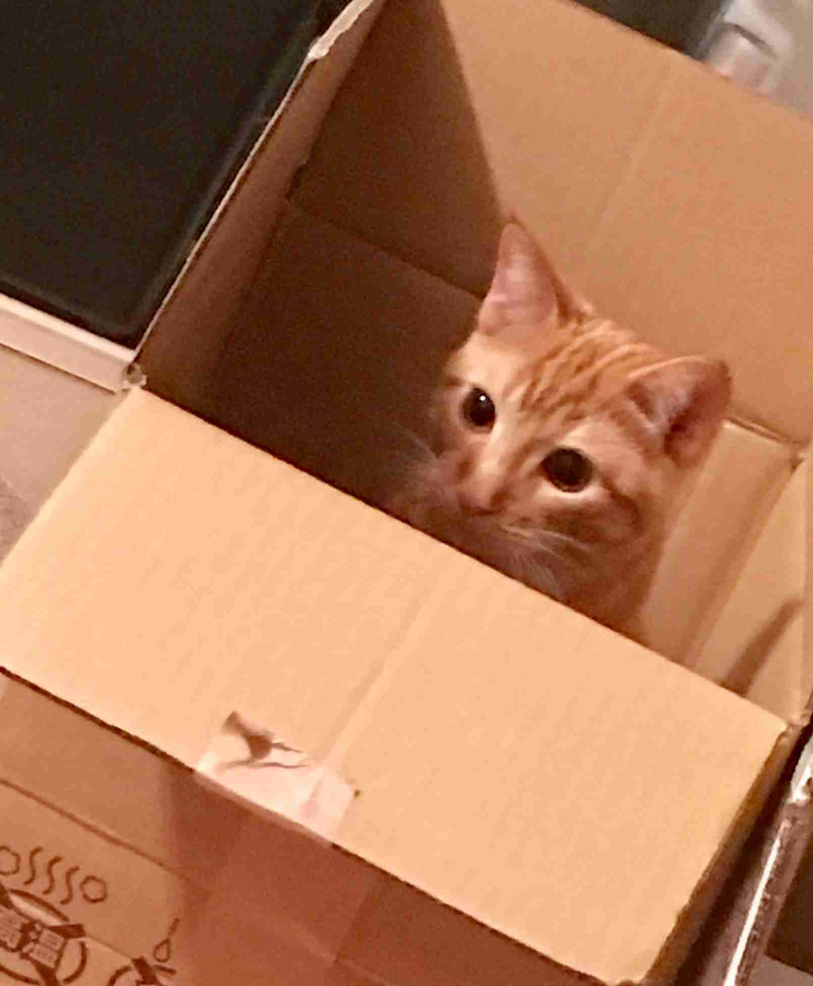 猫飼い主の雑談所!
