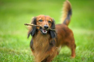 愛犬のここが可愛い!自慢トピ