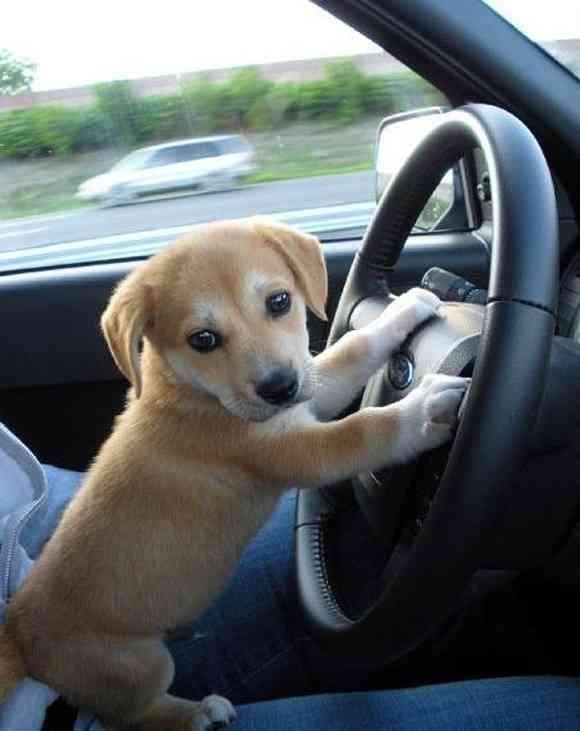 運転免許って必要ですか?