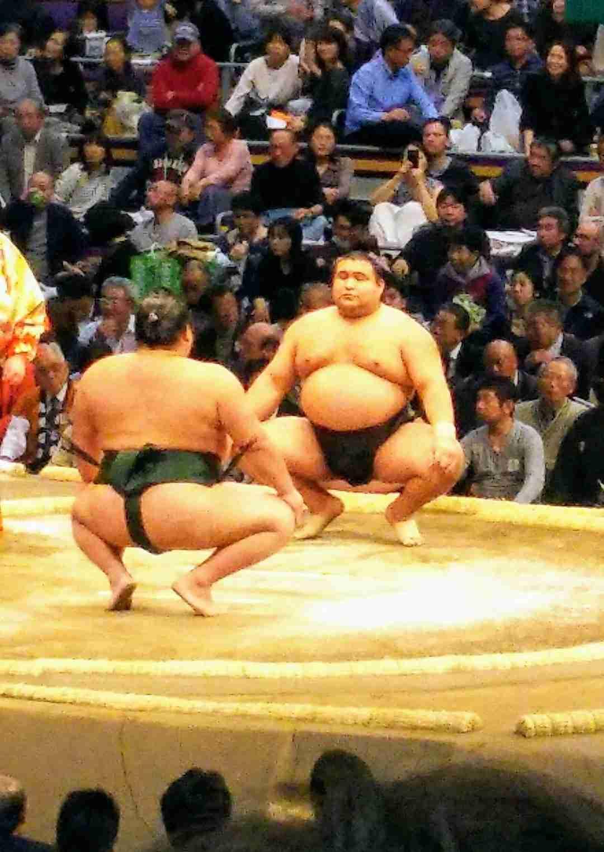 【実況・感想】大相撲11月場所を15日間応援しながら見届けるトピ!