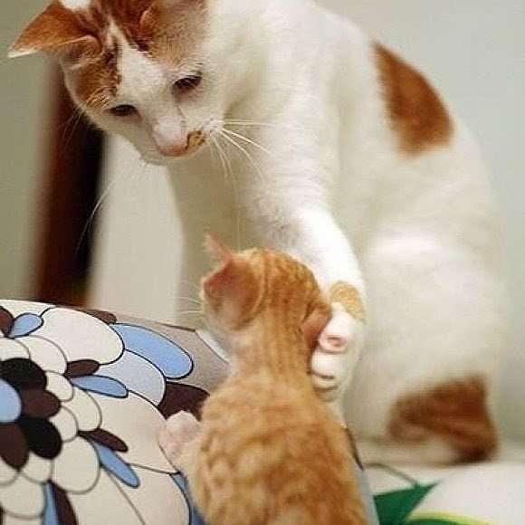 猫って中毒性ありませんか?