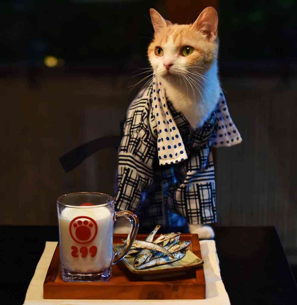 ハチワレ猫トピ