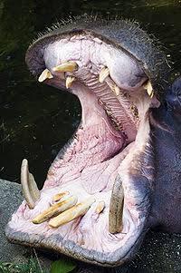 八木山動物公園で女性飼育員がカバにかまれ大けが、餌やり体験中止へ
