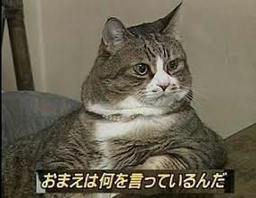 太っている猫・犬って、可愛い?可哀想?