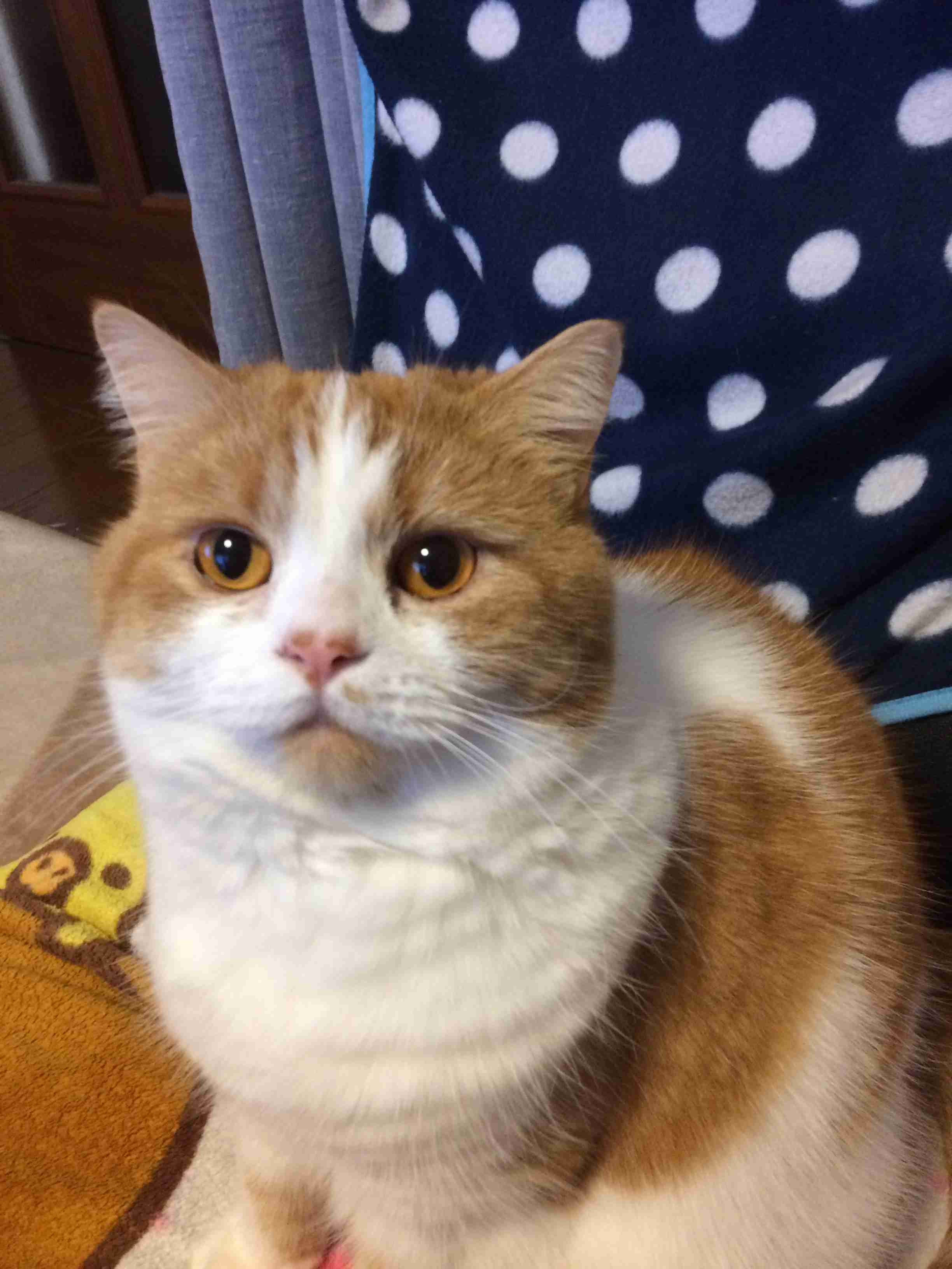 ガルちゃん猫カフェ22号店 開店しました♪ (初めての方も大歓迎!)