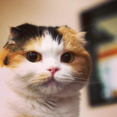 【画像】いろんな三毛猫が見たい