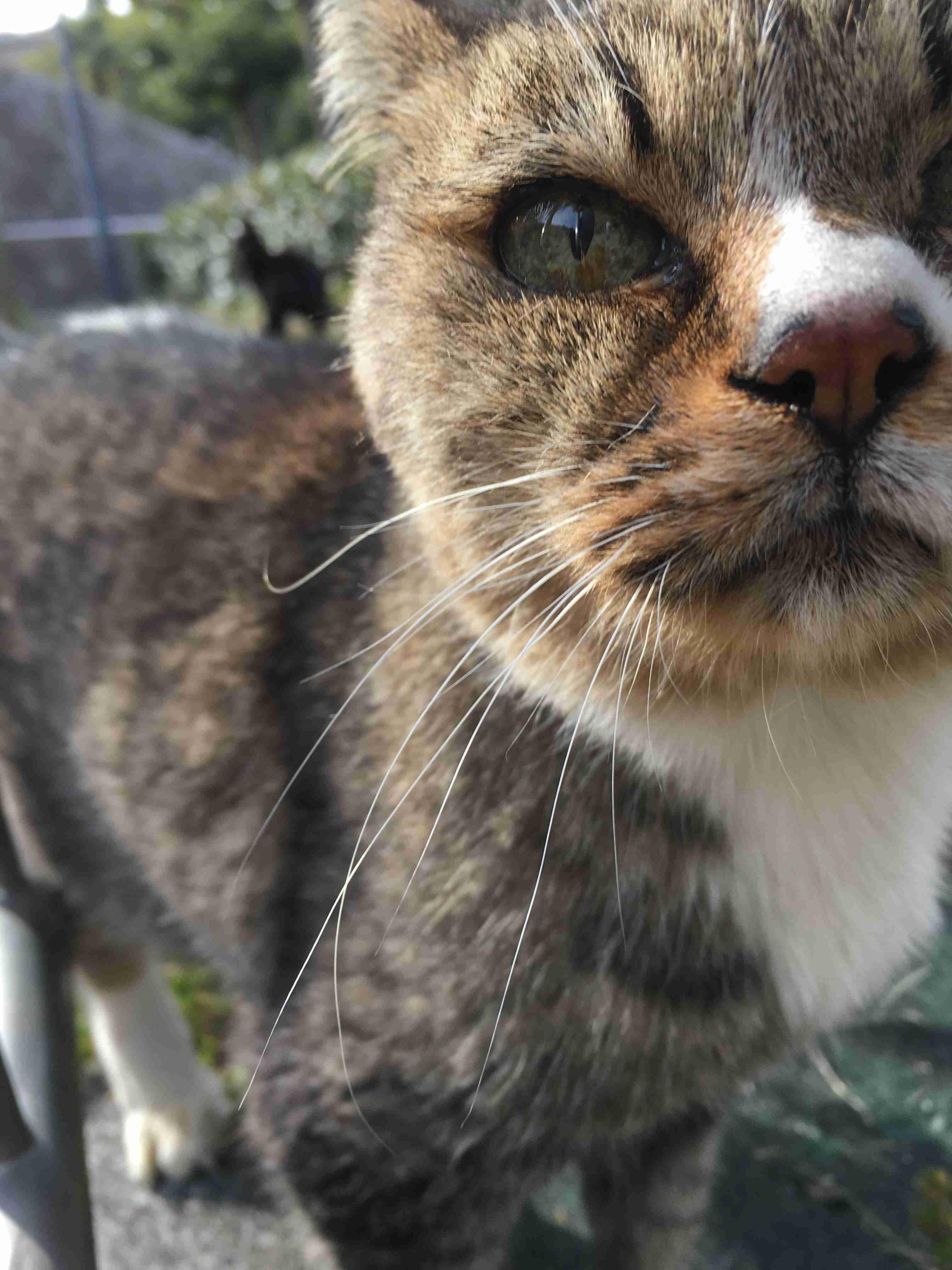 【画像・雑談】トラ猫好き集まれ