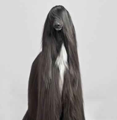 ロングヘア美人の画像貼って