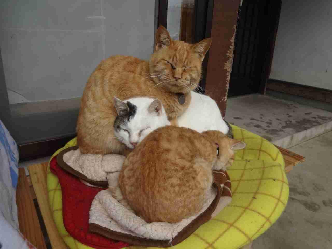 """猫の数が犬を上回る 飼育実態調査で初めて 最近の""""猫ブーム""""もプラス"""