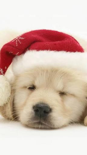 クリスマスソングは不快?長期化と連続、心の健康に影響も