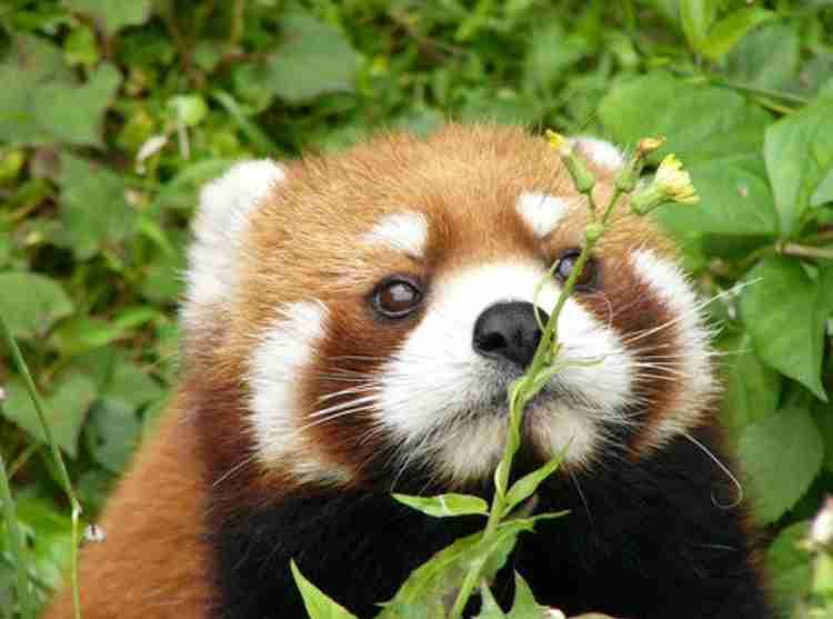 【可愛いパンダ】シャンシャンとか興味ない人