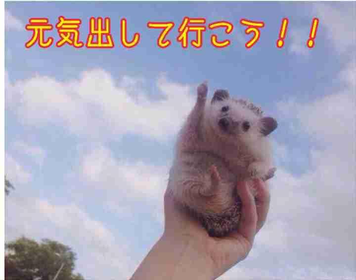 【画像】動物が労ってくれるトピ