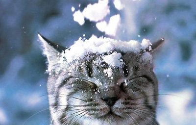 みなさんの冬のベースメイク教えて