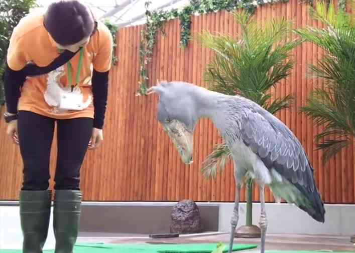鳥好きさん集合ー!