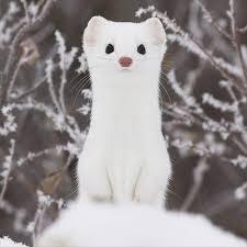 小動物の画像(犬猫以外)