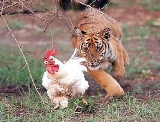 動物でキャバクラを作るトピ part3