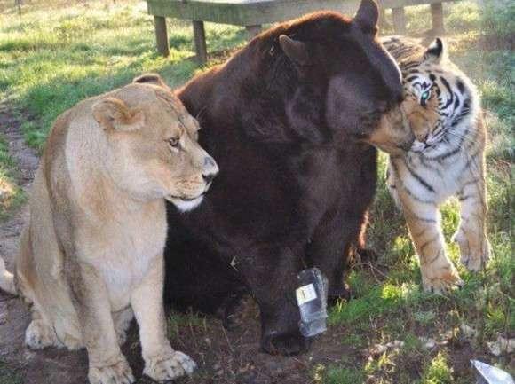 動物でパーティーを組んで魔王を倒しに行くトピ part2