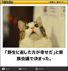 動物の画像を貼って言っていそうなことを書いてみる妄想トピ