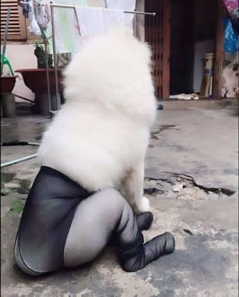 動物の【セクシー】写真集を作ろう!