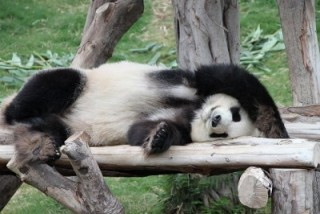 動物の寝てる画像で癒されておやすみなさい