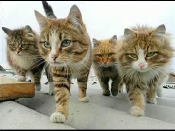 ずいずいずいと寄ってきた 青い空の下、隊列を組んで歩いてくる猫さんたち