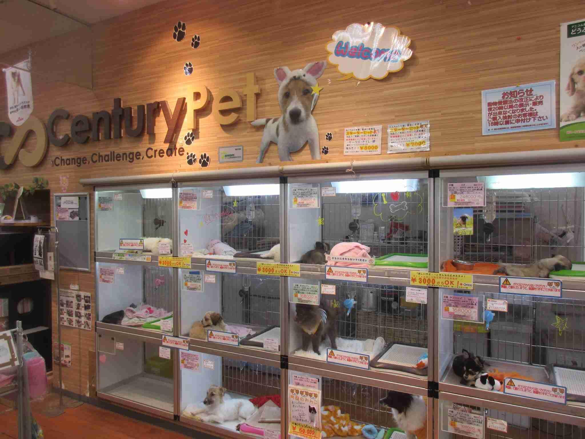 ペットショップで犬を買うのはダメなんですか?
