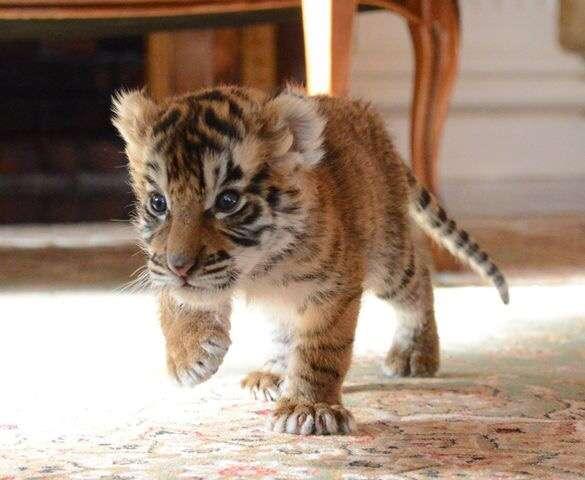 動物の赤ちゃん、子どもの画像