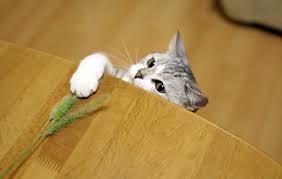 猫の好きな仕草