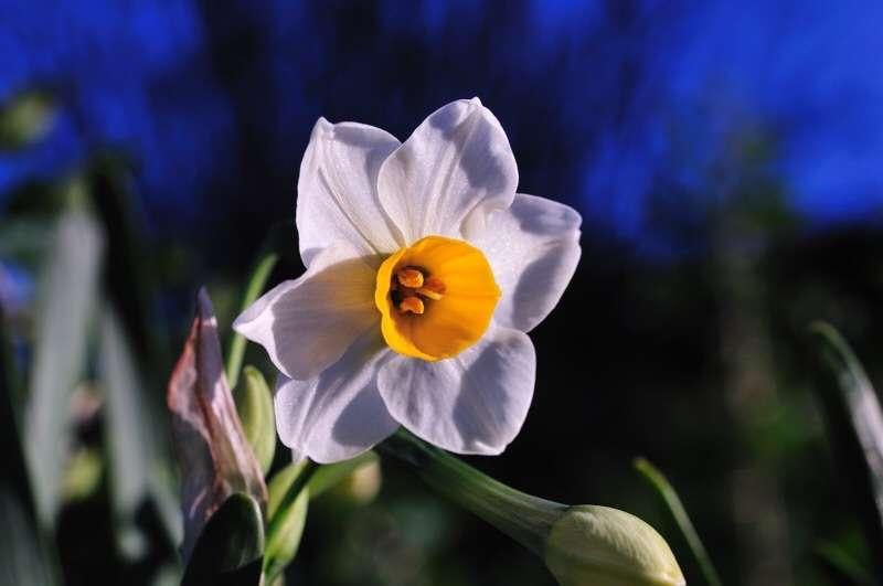 冬の花が集まるトピ