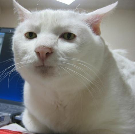 探してみよう!「かくれんぼ」が大得意な猫が話題
