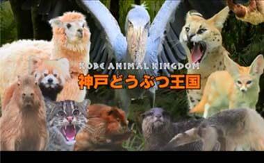 神戸観光のオススメを教えてください