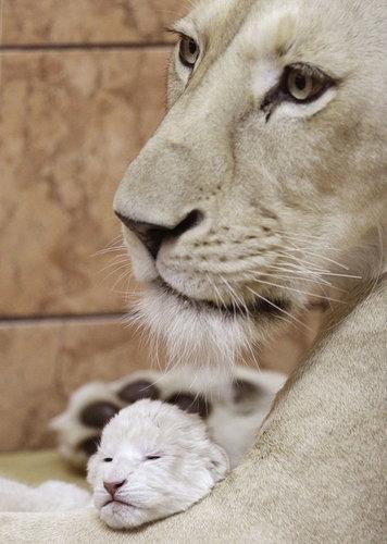 大人の方が可愛い、格好いい動物