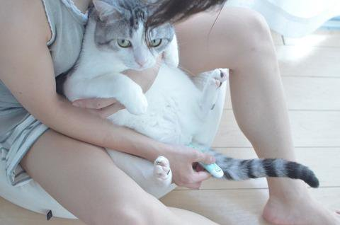 不祥事を起こして活動休止していた猫漫画家・うだま氏 活動再開を報告