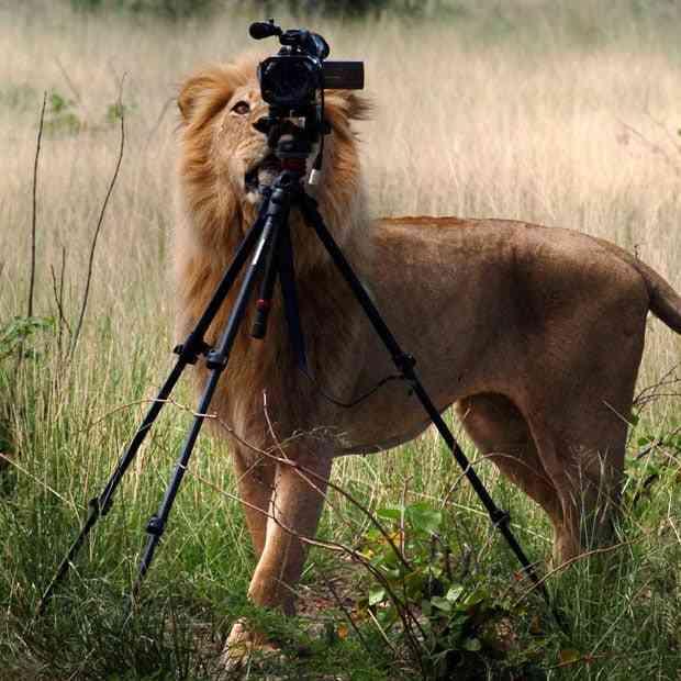動物の画像で海外ドラマを作るトピ