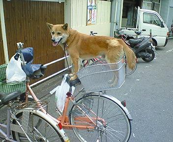 雑種犬を飼ってる方。