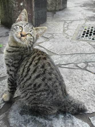 幸せを引っかけてくる!かぎしっぽの猫たち