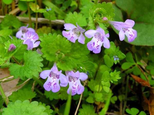 ひっそりと咲く野の花図鑑
