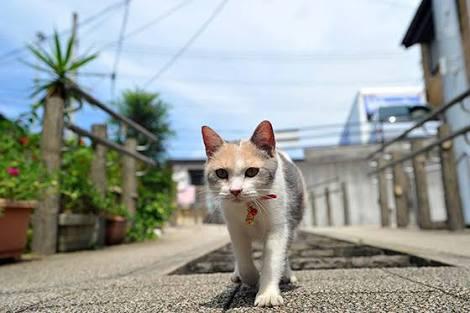 迷子犬(猫)を見つけたらどうしますか?