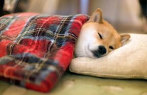 寝顔のトピ