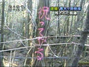 青木ヶ原の樹海で遺体を撮影して投稿、アメリカの人気ユーチューバーが批判にさらされる