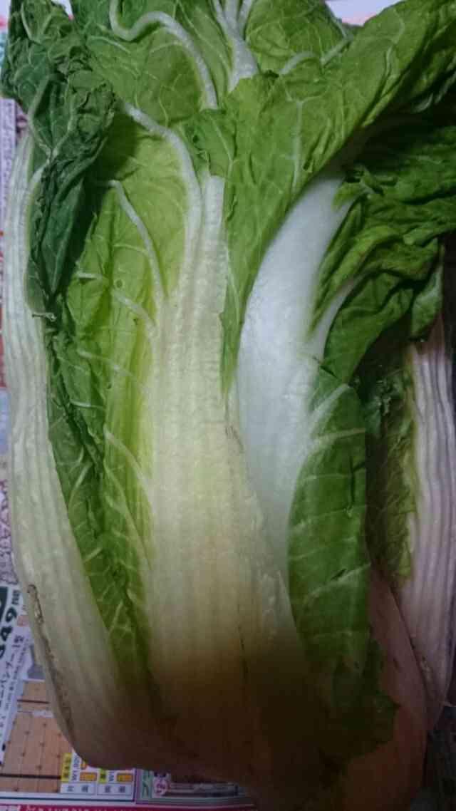 野菜高騰、白菜2倍…鍋の季節に家計圧迫