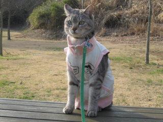 【犬猫飼い】なぜ避妊手術しないんですか?